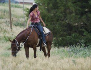 アイルランド乗馬体験